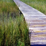 Mosaics on the Marsh 2013