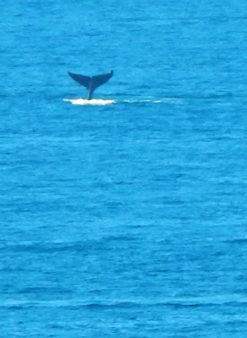 Mexico Whalewatching