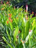 Sunlit Flora