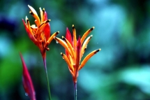 Flowers Onsite